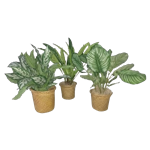 Assorted Faux Plants - Set of (3)