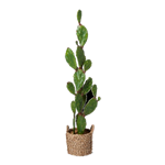 Prickly Pear Cactus in Basket