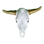 Cow Skull - Gold Horns